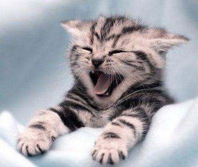 cat-yawning2