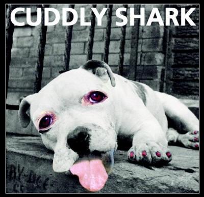 cuddly-shark-album